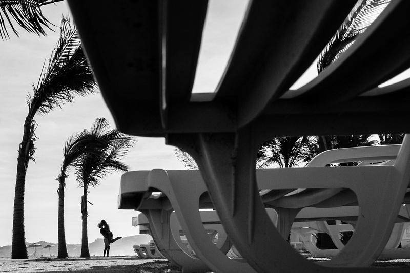 Palm trees San Jose del Cabo